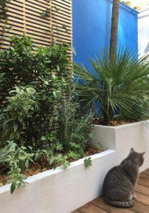 Le palmier donne un air exotique à ce patio.