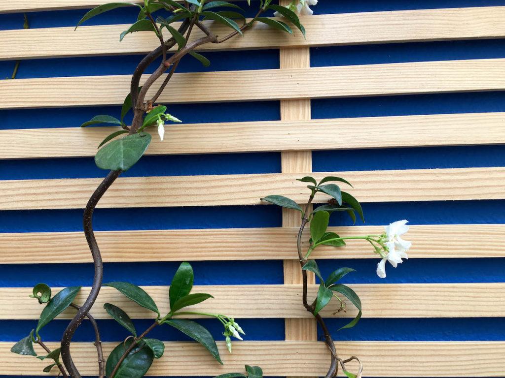 Détail des plantes grimpantes au fond du patio